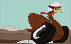 Turkey Racing.jpg